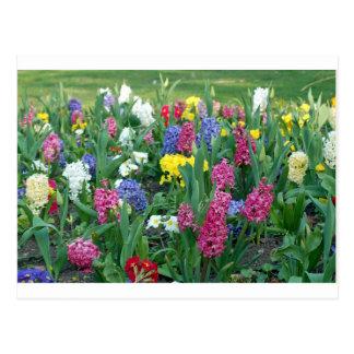 Flores coloridas de la primavera postal