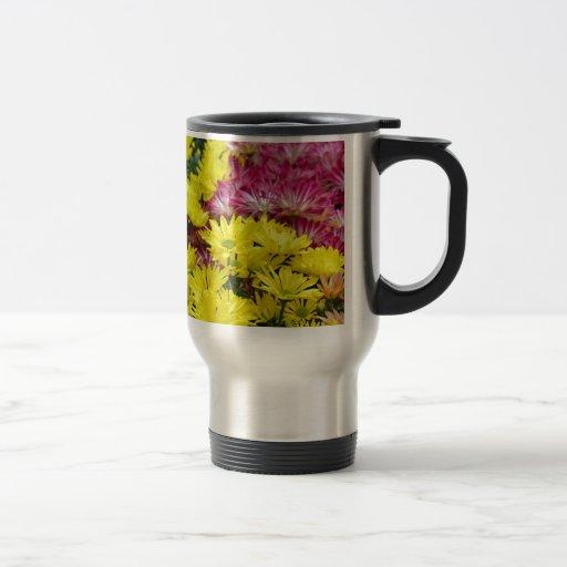 Flores coloridas del crisantemo taza