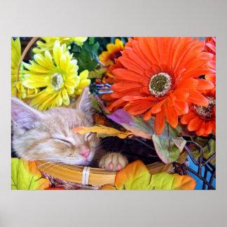Flores coloridas del ~ el dormir del gatito del ga poster