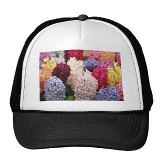 Flores coloridas del jacinto en la floración 2 gorras de camionero