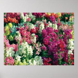 Flores coloridas del jardín póster