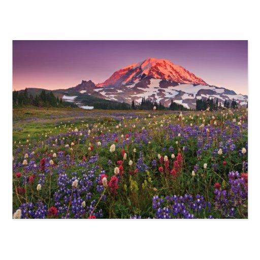 Flores coloridas en un parque nacional más lluvios tarjeta postal