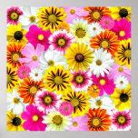 Flores coloridas poster