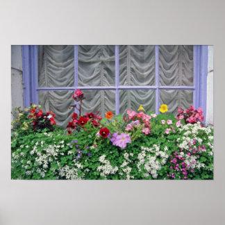 Flores coloridas rosadas del flowerbox impresiones