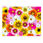 Flores coloridas tarjeta postal