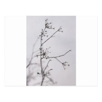 Flores congeladas postales