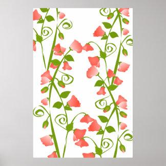 Flores coralinos del guisante de olor póster
