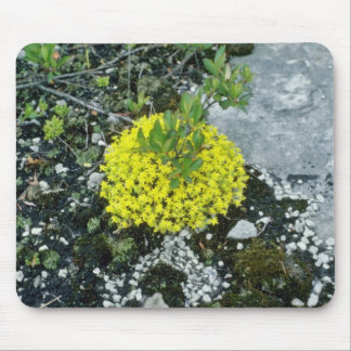 flores cubiertas de musgo amarillas de la uva de g alfombrillas de raton