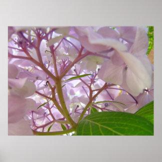 Flores curativas del Hydrangea de los regalos del  Poster