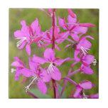 Flores de Alaska rosadas del Fireweed en la florac Azulejo Cerámica