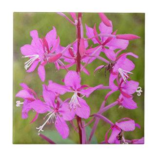 Flores de Alaska rosadas del Fireweed en la florac Azulejo Cuadrado Pequeño