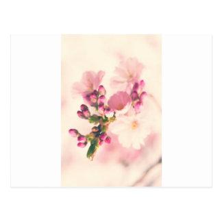 Flores de almendra especies postal