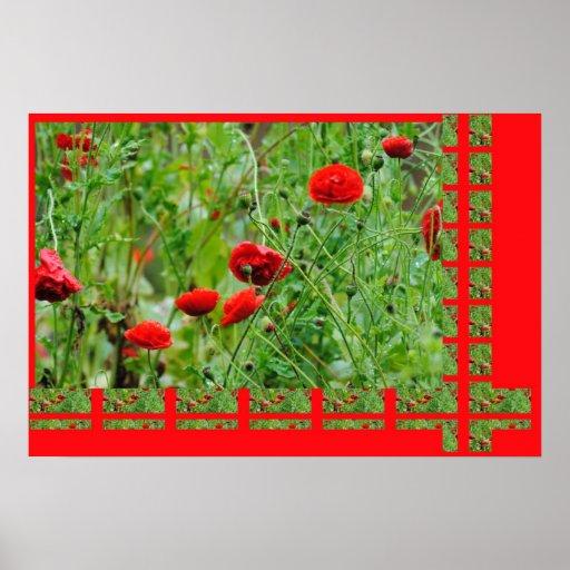 Flores de amapola póster
