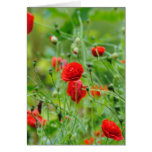 Flores de amapola tarjeta de felicitación