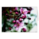 Flores de Apple de cangrejo en tarjeta de nota de