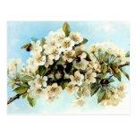 Flores de Apple del vintage Postales