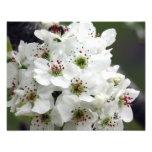 Flores de Apple en primavera Fotografias