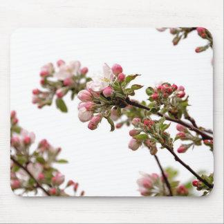 Flores de Apple en primavera Alfombrilla De Ratones