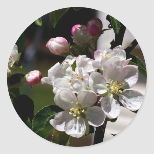 Flores de Apple Pegatinas Redondas