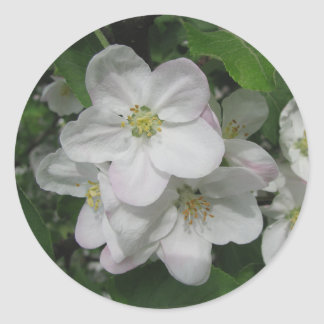 Flores de Apple Pegatina Redonda