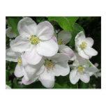 Flores de Apple Postal