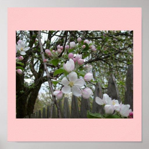 Flores de Apple Posters