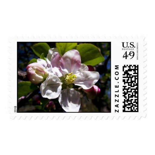 Flores de Apple Sellos