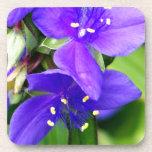 Flores de araña púrpuras posavaso