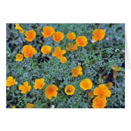 Flores de arriba anaranjadas de las amapolas de Ca Tarjeta De Felicitación