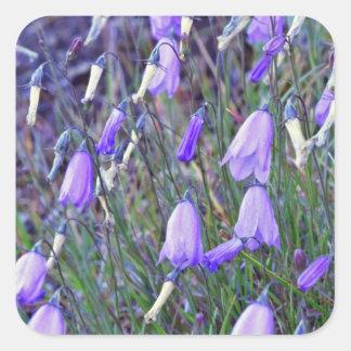 Flores de Belces azules Pegatina Cuadrada