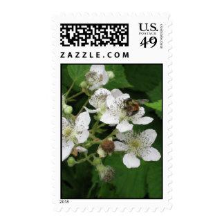 Flores de Blackberry del amor de las abejas Sello