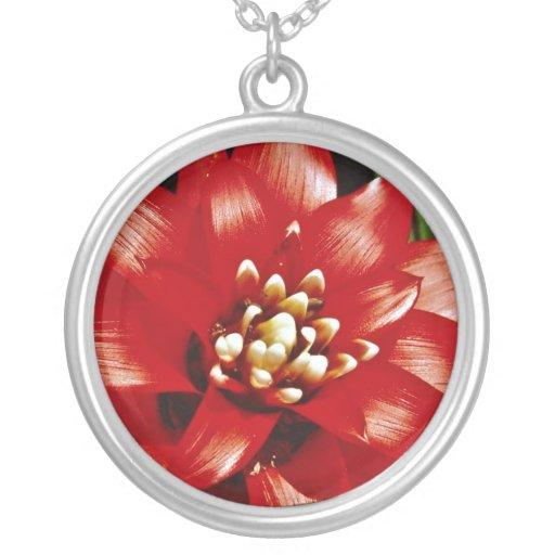 Flores de Bromeliad Colgante Redondo