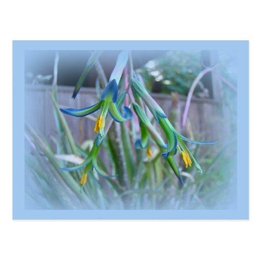 Flores de Bromeliad en azul Postales