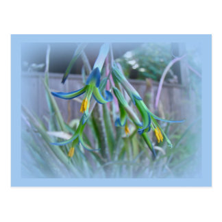 Flores de Bromeliad en azul Tarjeta Postal