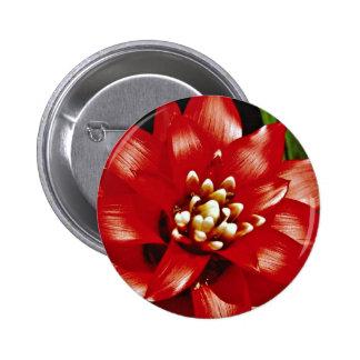 Flores de Bromeliad Pins