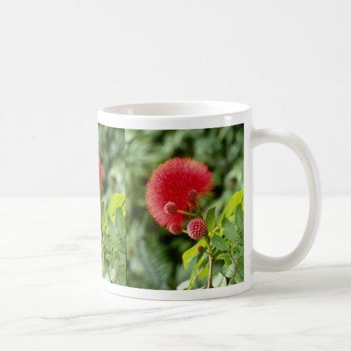 Flores de Calliandra Inaquilatera (soplo de polvo) Tazas De Café