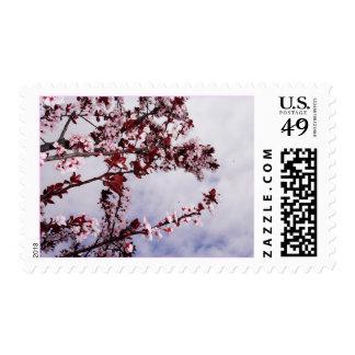 Flores de cereza sello postal