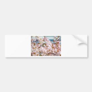 Flores de cerezo 2 etiqueta de parachoque