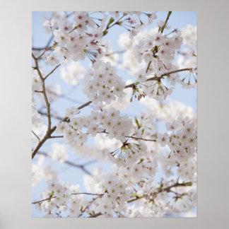 Flores de cerezo 2 póster