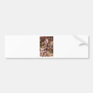 Flores de cerezo 4 etiqueta de parachoque