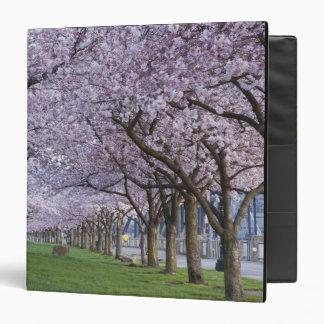 Flores de cerezo a lo largo del río de Willamette,