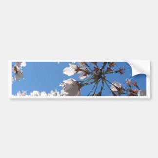 Flores de cerezo ascendente cercano pegatina de parachoque