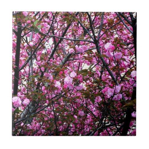 Flores de cerezo azulejo
