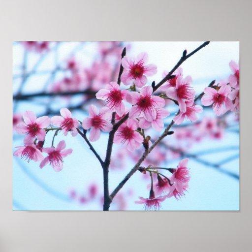 Flores de cerezo - B Posters