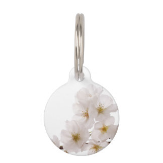 Flores de cerezo blancas bonitas identificador para mascotas
