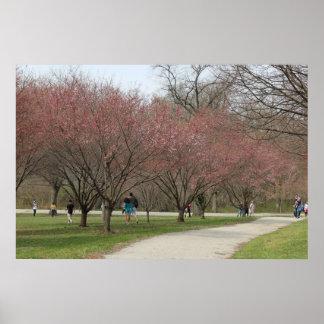 Flores de cerezo con la gente póster