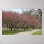 Flores de cerezo con la gente posters