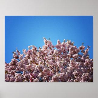 Flores de cerezo contra el cielo, pequeño póster