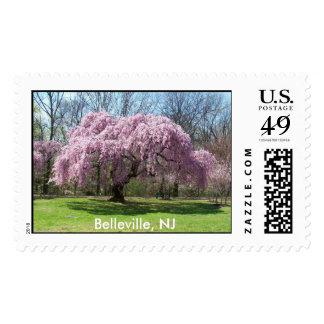Flores de cerezo de Belleville NJ Estampilla