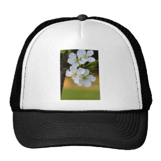 Flores de cerezo de la primavera de Snowy White Gorras